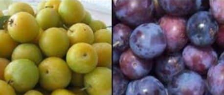 diferentes ciruelas y sus propiedades para la salud