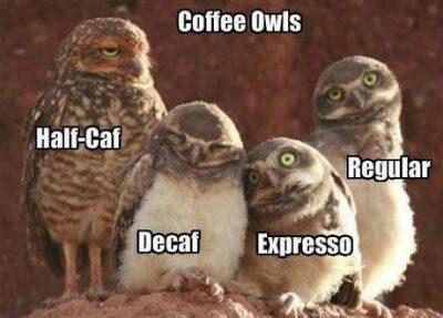 cafe-buhos-3361290