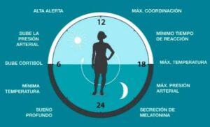 melatonina ciclo de sueño