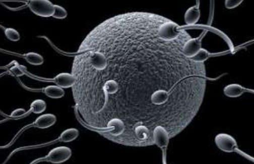 fertilidad masculina