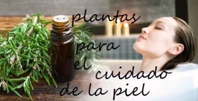 plantas buenas para la piel