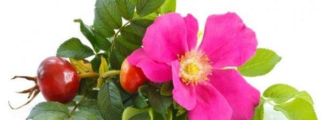 Rosa Mosquera para la piel