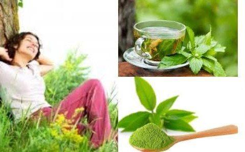 beneficios de la teanina